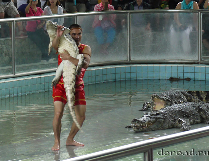 crocodilefarm12