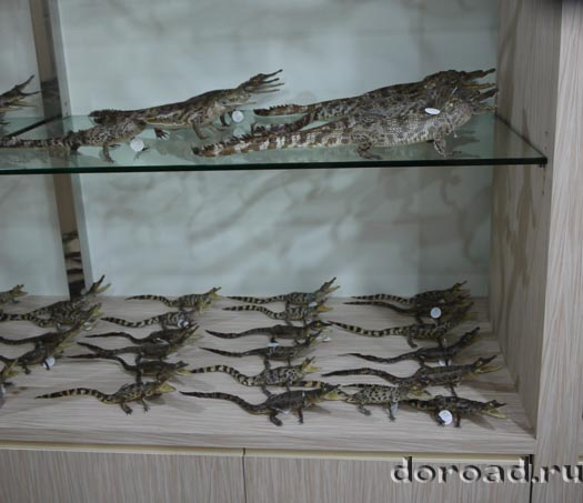 crocodilefarm15