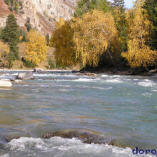 Осенний Горный Алтай — Бирюзовые реки Алтая